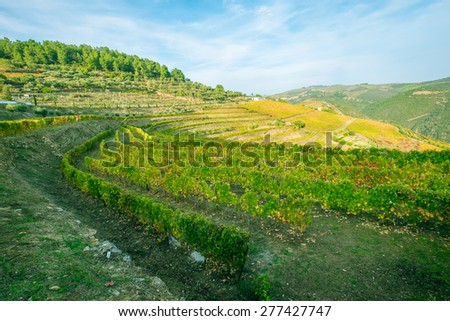 Terraced vineyards of the Douro Valley, Portugal that illustrates the viticulture and heritage - stock photo