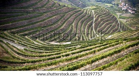 Terraced vineyards of the Douro Valley, Portugal that illustrators the viticulture and heritage - stock photo
