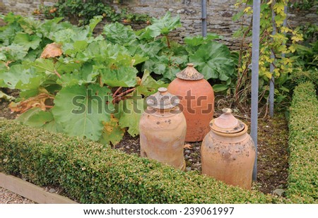 Terracotta Rhubarb Forcing Jars in a Vegetable Garden, near Barnstaple, in the County of Devon, England, UK - stock photo