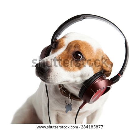 Terrier wearing headphones and collar - stock photo