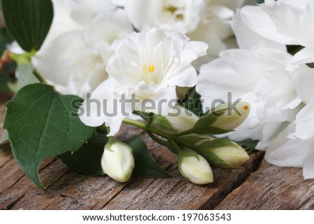 terry jasmine flowers close up on an old wooden table  - stock photo