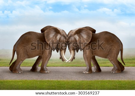 test of strength concept elephants pushing against each other  - stock photo