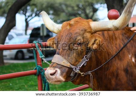 Texas Longhorn - stock photo