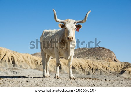 Texas longhorn cow breed with sawed with his horns against the sky - stock photo