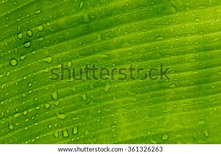 Texture background of fresh green Leaf. - stock photo