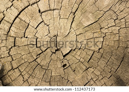 texture cut of a tree with cracks - stock photo