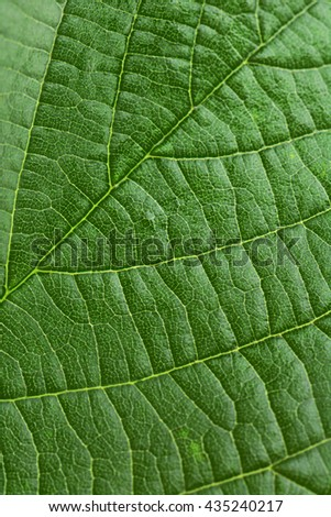 Texture green leaves - stock photo