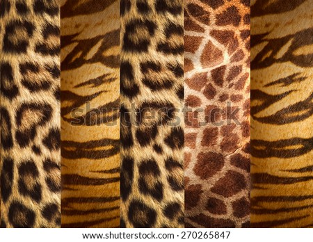 Texture of animal skins ,leopard,tiger and giraffe  - stock photo