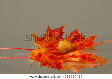 Texture of autumn leaves. Photographed in the autumn park - stock photo