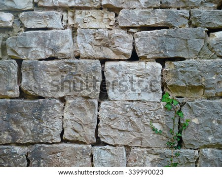 Texture of brick wall with green plant. Photo of texture. - stock photo