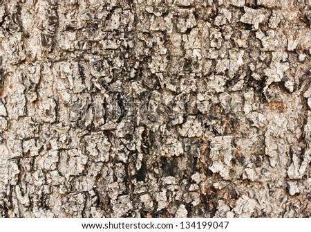 texture of brown tree bark - stock photo