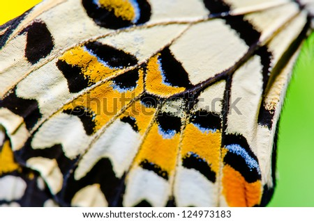 Texture of butterfly wing, Thailand. - stock photo