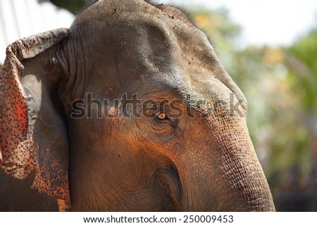 Texture of elephant's rough skin - stock photo