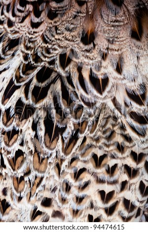 Texture of  feathers wing of falcon. - stock photo