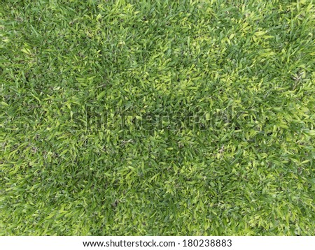 Texture of grass. Axonopus compressus. - stock photo