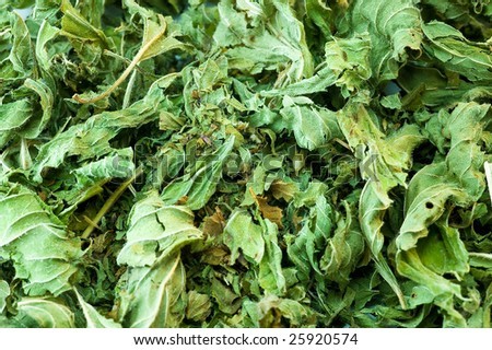 texture of green cooking ingredient mint - stock photo