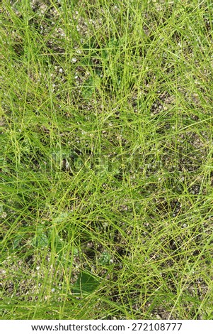 texture of green grass, background  - stock photo