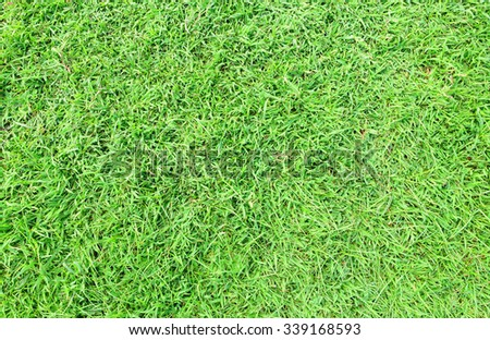 Texture of Green Grass Background - stock photo