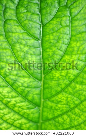 Texture Of Green Leaf As Background - stock photo