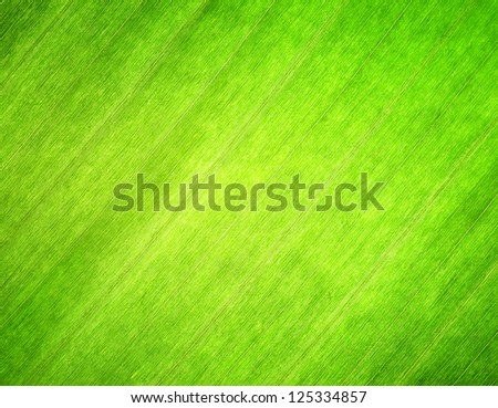 Texture of green leaf. Nature background. - stock photo
