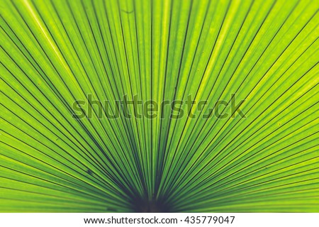 Texture of Green palm Leaf (Vintage filter effect used) - stock photo