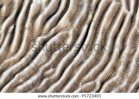 Texture of hard coral in the Red Sea - stock photo