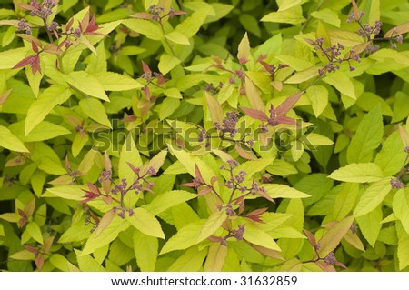 texture of leaves and flowers - stock photo