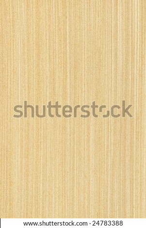 Texture of maple (high-detailed wood texture series) - stock photo