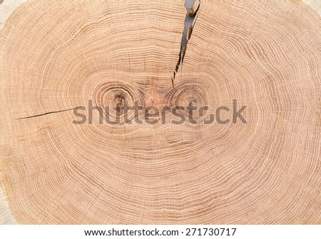 Texture of oak wood - stock photo