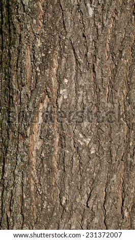 Texture of old big tree bark covered with green moss - stock photo