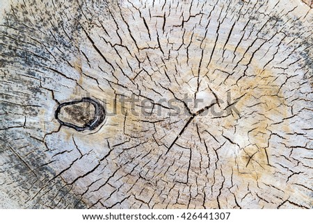 texture of old wood. Cross section of the old tree - stock photo