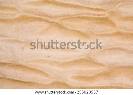 Texture of Quilted Maple, used as background - stock photo