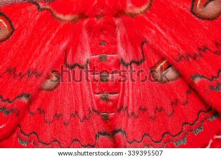 Texture of red and brown sikkim silk moth - stock photo