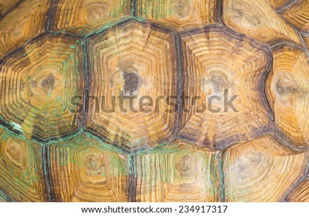 Texture of Sulcata Tortoise carapace - stock photo