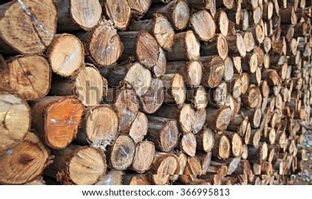 Texture of the felled logs. Abstract background - stock photo