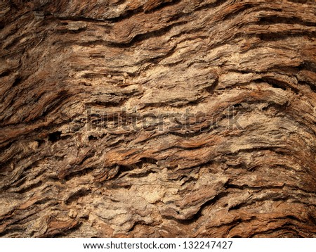 Texture of tree background and Wall of  tree texture - stock photo