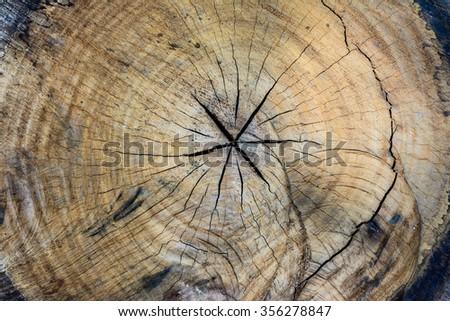 texture of tree stump - stock photo