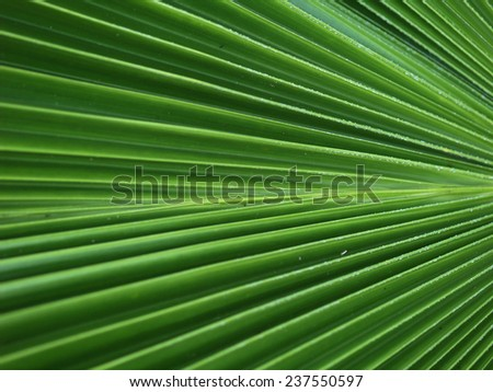 Texture of  tropical plant leaf - stock photo