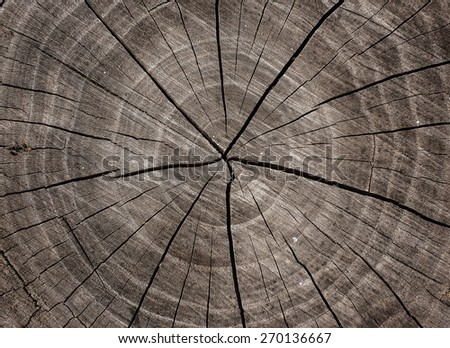 texture of wood cut-off for the background - stock photo