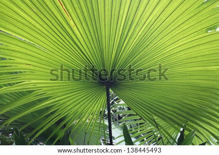 texture on green palm leaf - stock photo