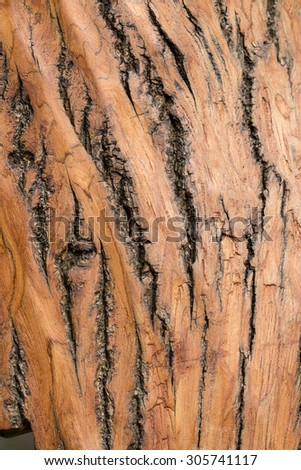 Texture shot of brown tree bark - stock photo