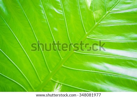Textured background. Close up of green tropical leave. - stock photo