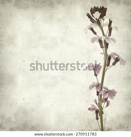 textured old paper background with Erysimum; scoparium, plant endemic to Gran Canaria - stock photo