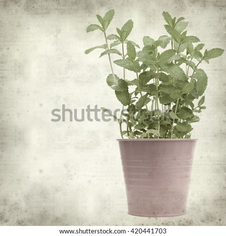 textured old paper background  with fresh growing garden mint - stock photo