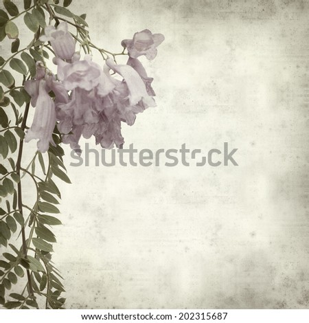 textured old paper background with Jacaranda; - stock photo