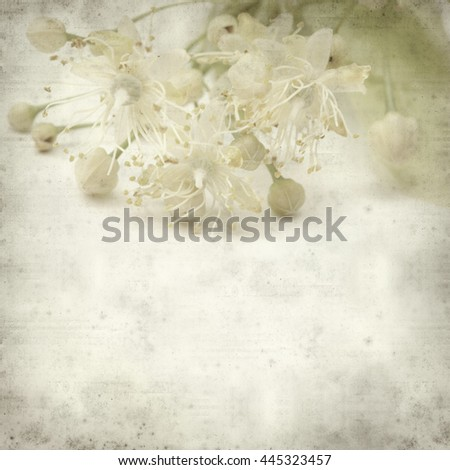 textured old paper background with medicinal herb lime blossom  - stock photo