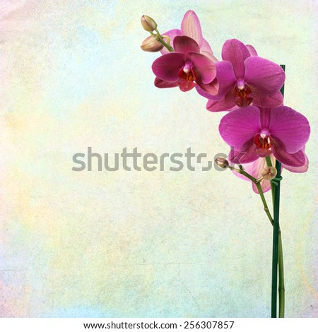 textured old paper background with orchid - stock photo