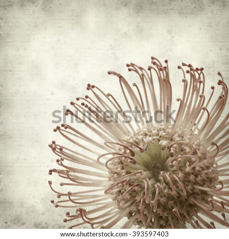 textured old paper background with red protea flowers - stock photo