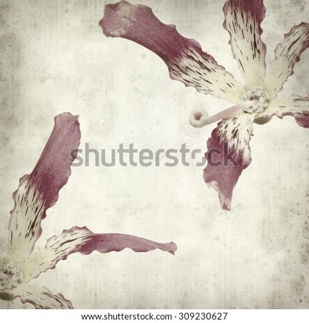 textured old paper background with silk floss tree flower - stock photo