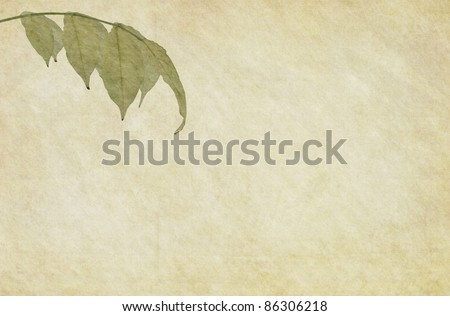 Textured paper background with a foliage of Wisteria tree. - stock photo
